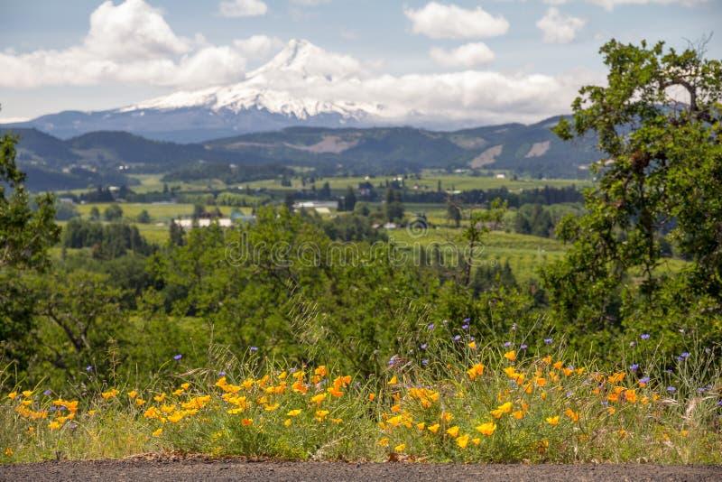 Gelbe und blaue Wildflowers mit unscharfer Ackerland und Berg-Haube lizenzfreies stockfoto