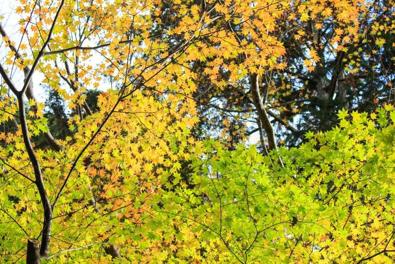 Gelbe und grüne Bäume lizenzfreies stockfoto