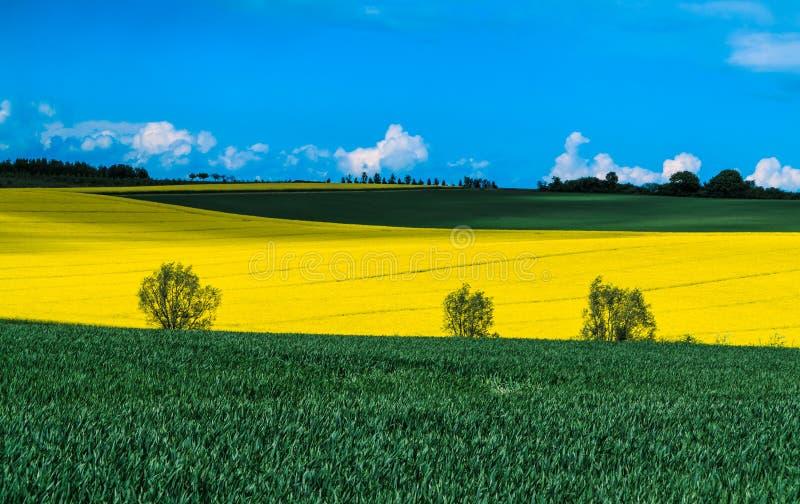 Gelbe und grüne Felder stockfotografie