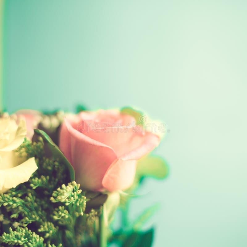 Gelbe und rosa Rosen lizenzfreie stockfotos