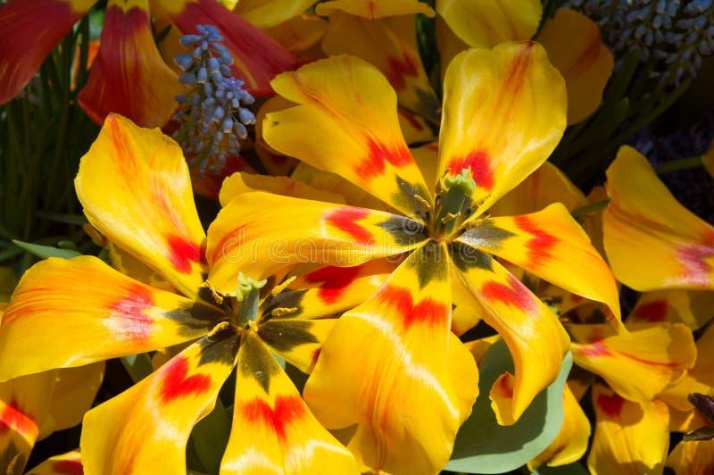 Gelbe und rote Blumen stockbild