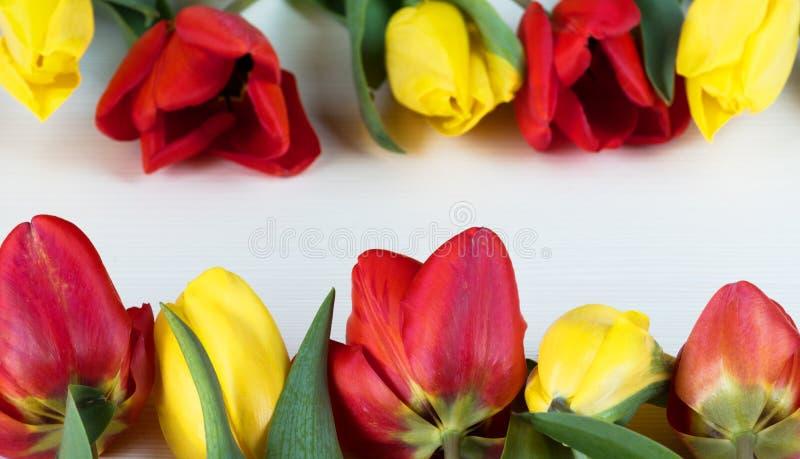 Gelbe und rote Tulpen auf weißem hölzernem Brett Hintergrund, Muster, Beschaffenheit lizenzfreie stockfotografie