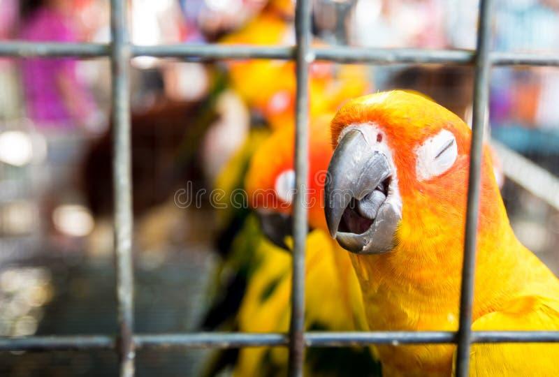 Gelbe Vögel sind Falle in einem Käfig stockbilder