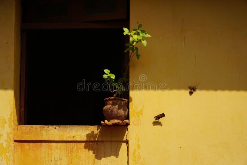 Gelbe Wand lizenzfreie stockbilder