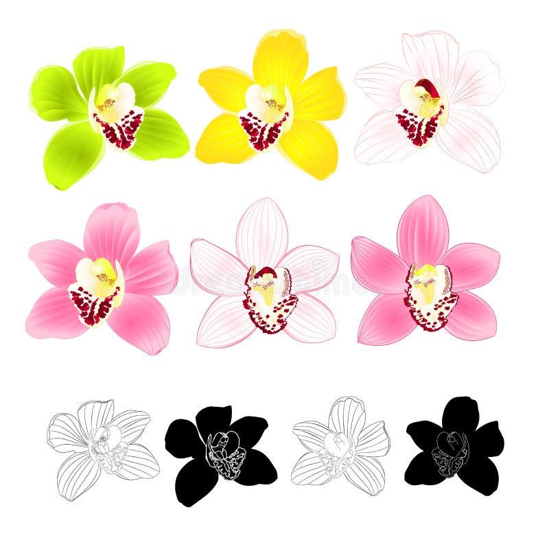 Gelbe weiße Blume des tropischen Orchidee Cymbidiumgrünrosas realistisch und Entwurf und Schattenbild auf weißem Hintergrundweinl stock abbildung