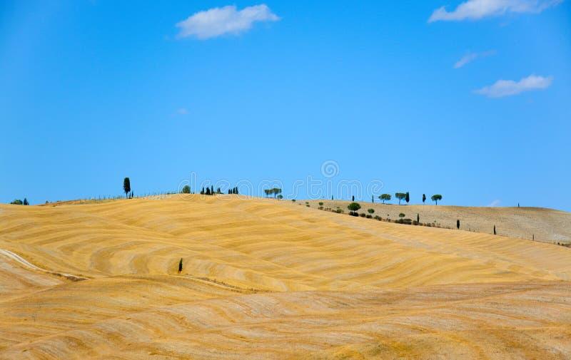 Gelbe Weizenfelder von Toskana, Italien, nach Ernte lizenzfreies stockbild