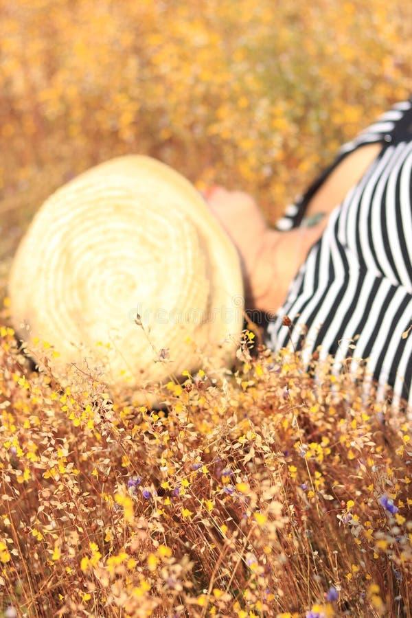 Gelbe Wiese in helle Tage stockfotografie