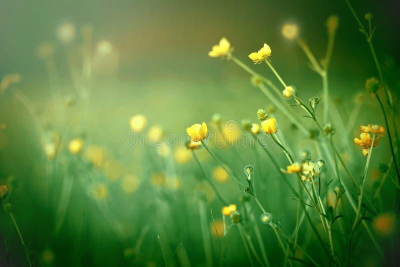 Gelbe Wiesenblumen schließen oben stockfotos