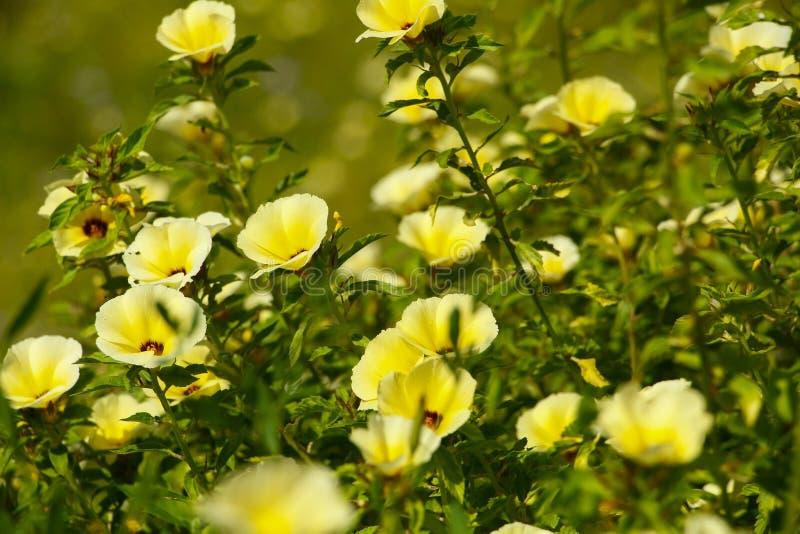 Gelbe Wildflowers stockbilder
