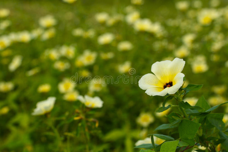 Gelbe Wildflowers 2 stockbild