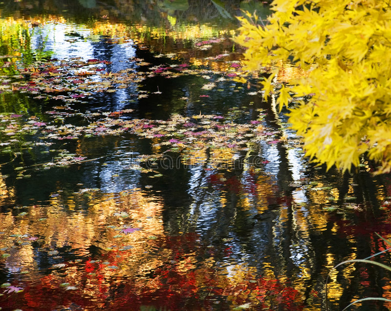 Gelber Baum Water Reflections Van Dusen Gardens lizenzfreies stockfoto