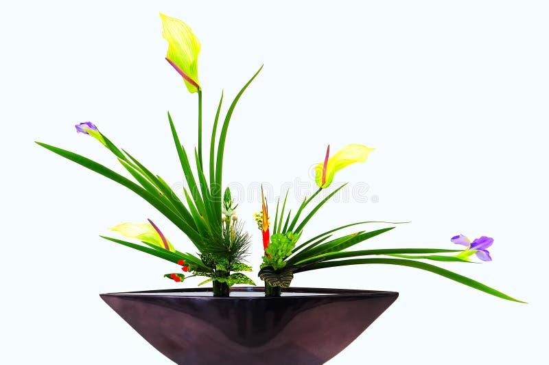 Blumen im Vasenweißhintergrund stockbilder