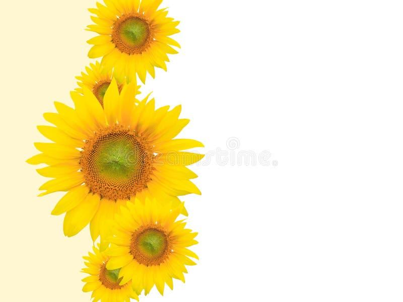 Gelber Blumen-Hintergrund, Sommer oder Frühlings-Thema stockfotografie