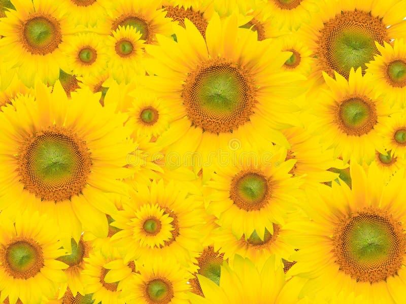 Gelber Blumen-Hintergrund, Sommer oder Frühlings-Thema lizenzfreies stockfoto