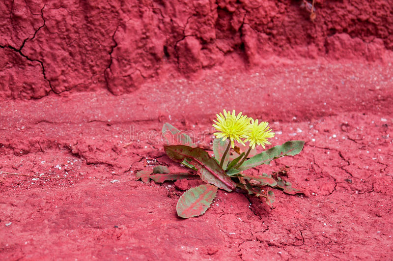 Gelber Blumenhintergrund lizenzfreie stockfotografie