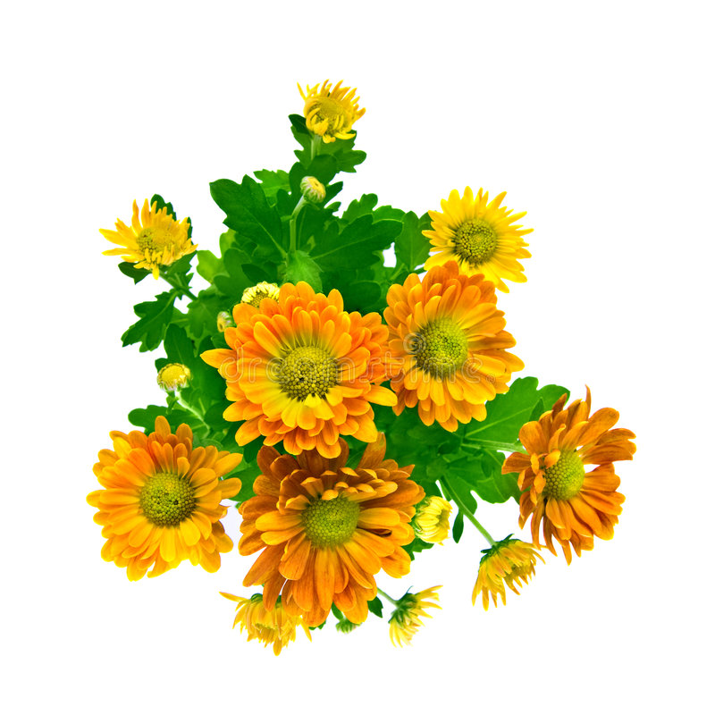 Gelber Chrysanthemeblumenstrauß getrennt auf Weiß lizenzfreies stockbild