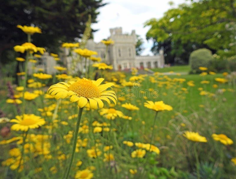 Gelber Feldgänseblümchenlandherrenhausschloss-Parkboden stockbild