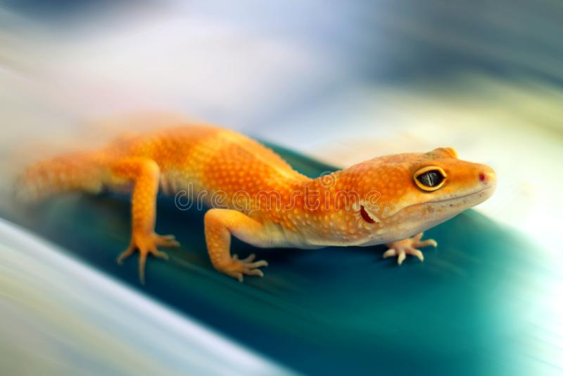 Gelber Gecko, der oben mit Unschärfehintergrund kriecht stockfotografie