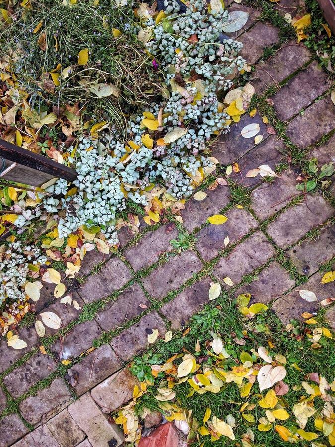 Gelber gefallener Autumn Leaves auf dem Bürgersteig gepflastert mit Gray Concrete Paving Stones Beschneidungspfad eingeschlossen  lizenzfreie stockfotos