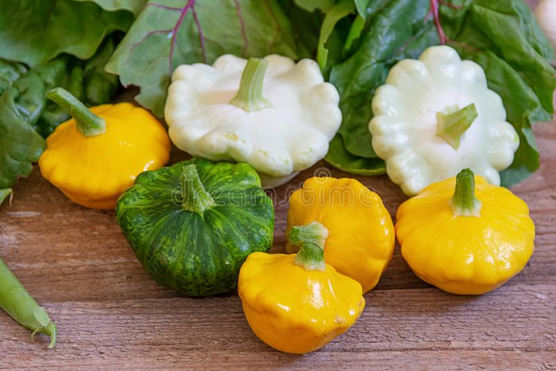 Gelber, grüner und weißer Kürbis lizenzfreie stockfotos