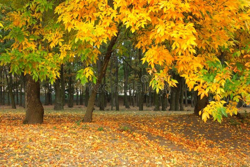 Gelber Herbst im Park lizenzfreie stockfotos