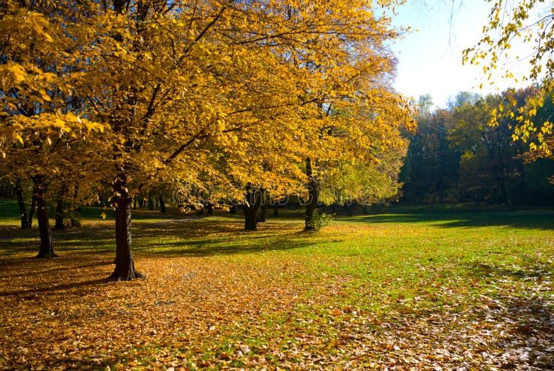 Gelber Herbstgarten stockbild