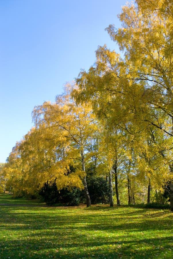 Gelber Herbstgarten lizenzfreie stockfotos