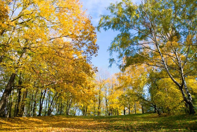 Gelber Herbstgarten lizenzfreies stockfoto