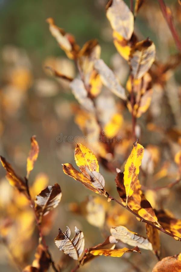 Gelber Herbstlaub lizenzfreies stockbild