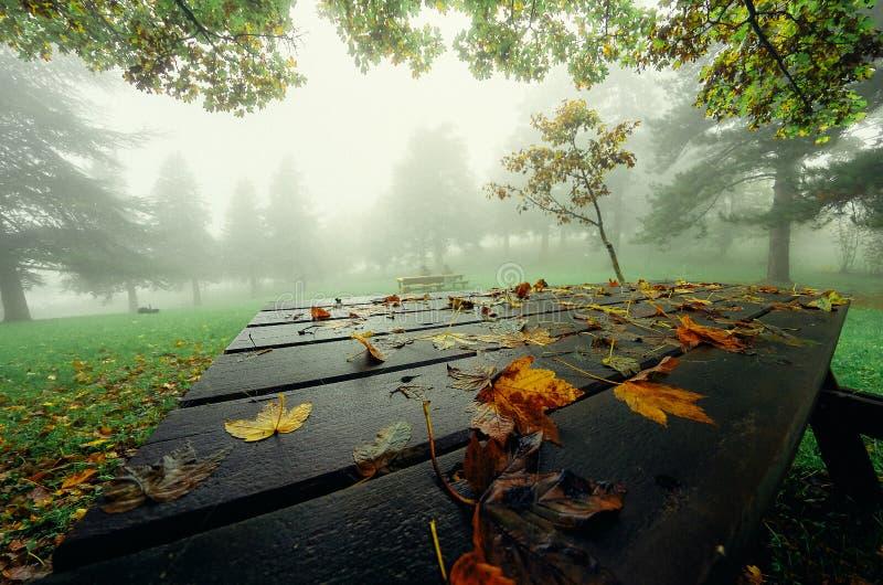 Gelber Herbstlaub auf dem Tisch der Hintergrund eines nebelhaften Waldes stockfotos