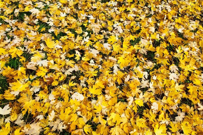 Gelber Herbstlaub am Boden stockbilder