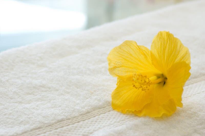 Gelber Hibiscus stockbild