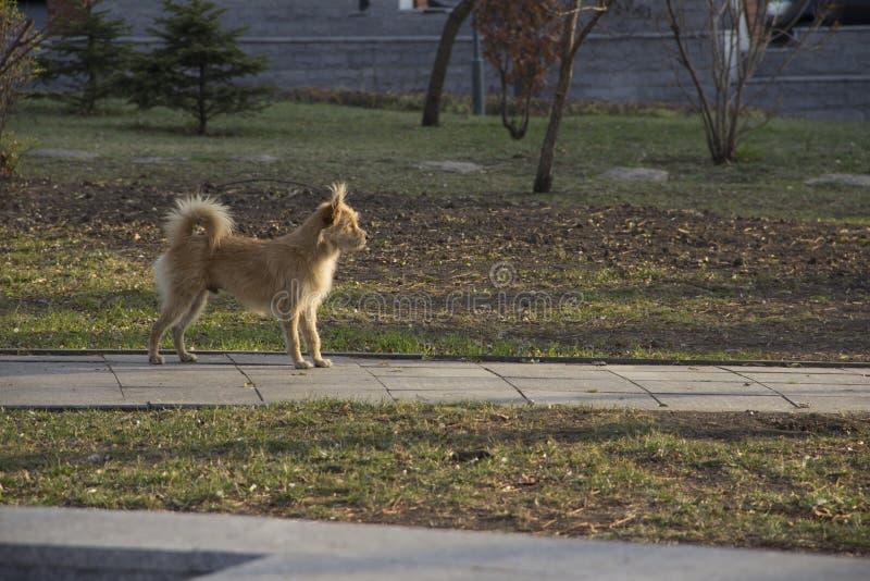 gelber Hund im Park lizenzfreies stockbild