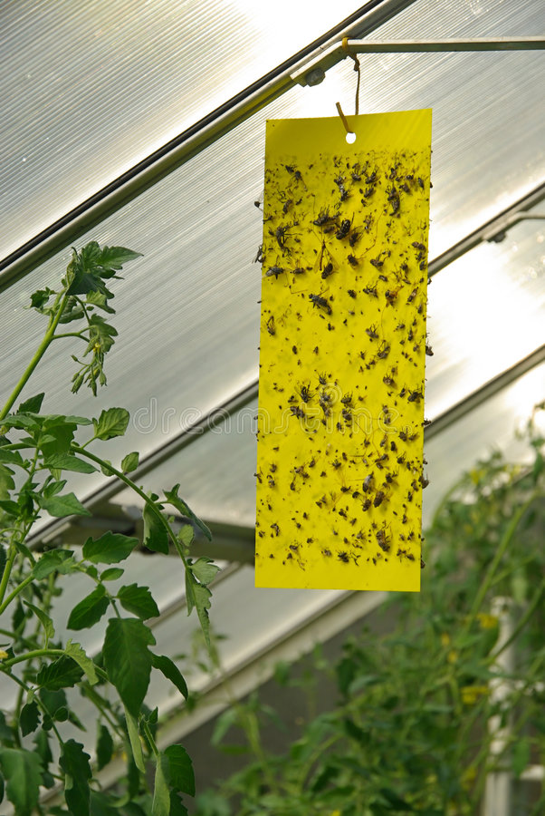 Gelber Insektsteuerknüppel lizenzfreie stockbilder
