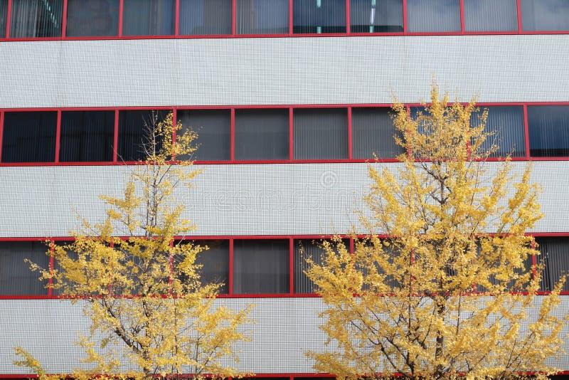 Gelber Laubbaum und rotes Fenster lizenzfreie stockfotos