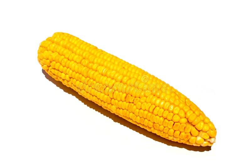 Gelber Mais auf weißem Hintergrund Süßer gelber Mais lokalisiertes Studiofoto stockbilder