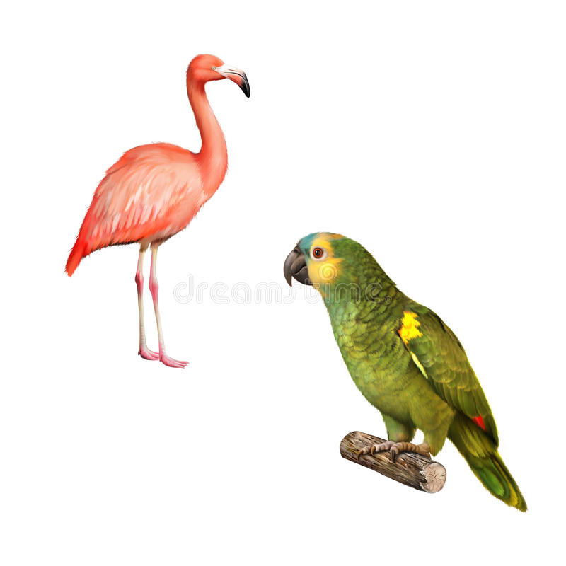 Gelber Naped Amazonas Papagei Flamingo an lokalisiert lizenzfreie abbildung