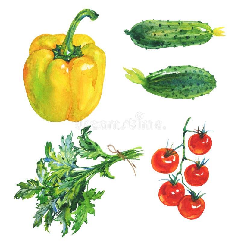 Gelber Paprikapfeffer des Aquarells, Petersilie, Tomate, Gurke lizenzfreie abbildung