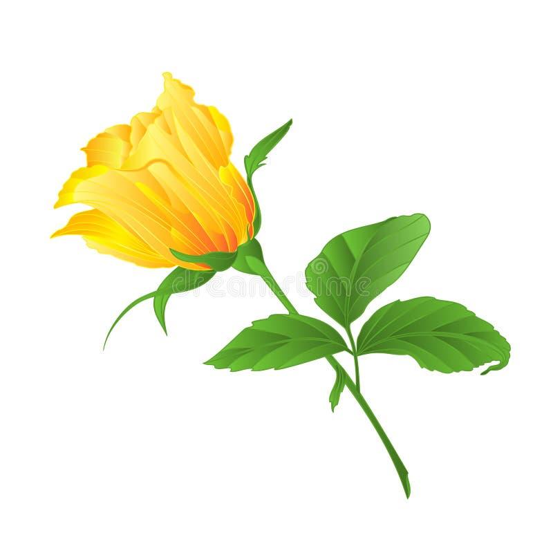 Gelber rosafarbener Zweig des Rosebud mit Blättern auf einer weißen Hintergrundweinlese-Vektorillustration editable vektor abbildung