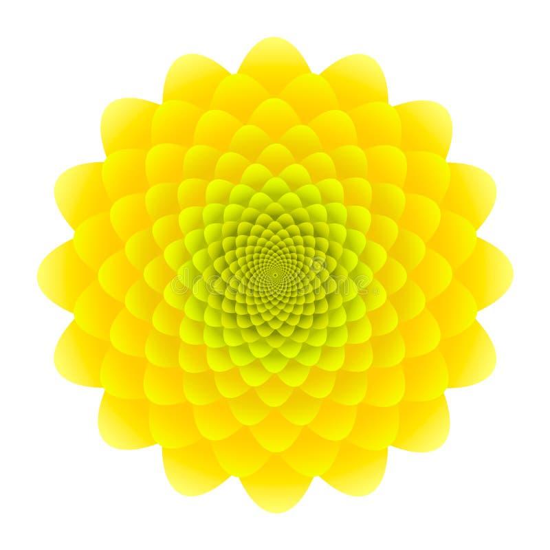 Gelber Sonnenblumenblütenstand Abstraktes Blumenmuster lokalisiert auf weißem Hintergrund stock abbildung