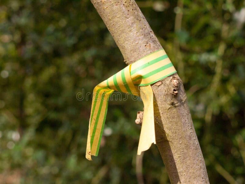 gelber und grüner Plastik eingewickelt gebunden um Baumabschluß herauf branc stockfotografie