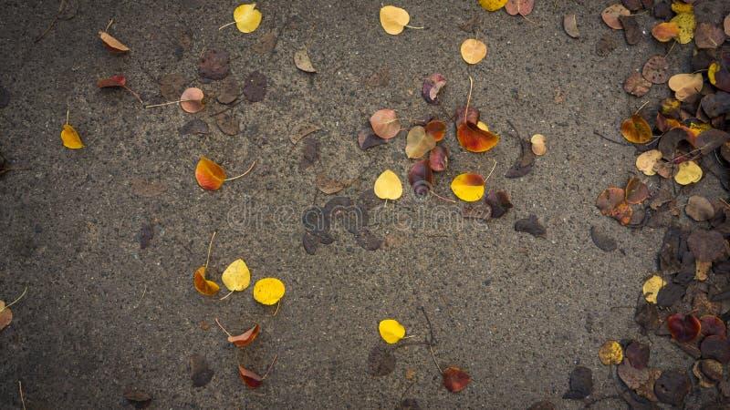 Gelber und orange Herbstlaub auf Asphalt graues Wetter stockbild