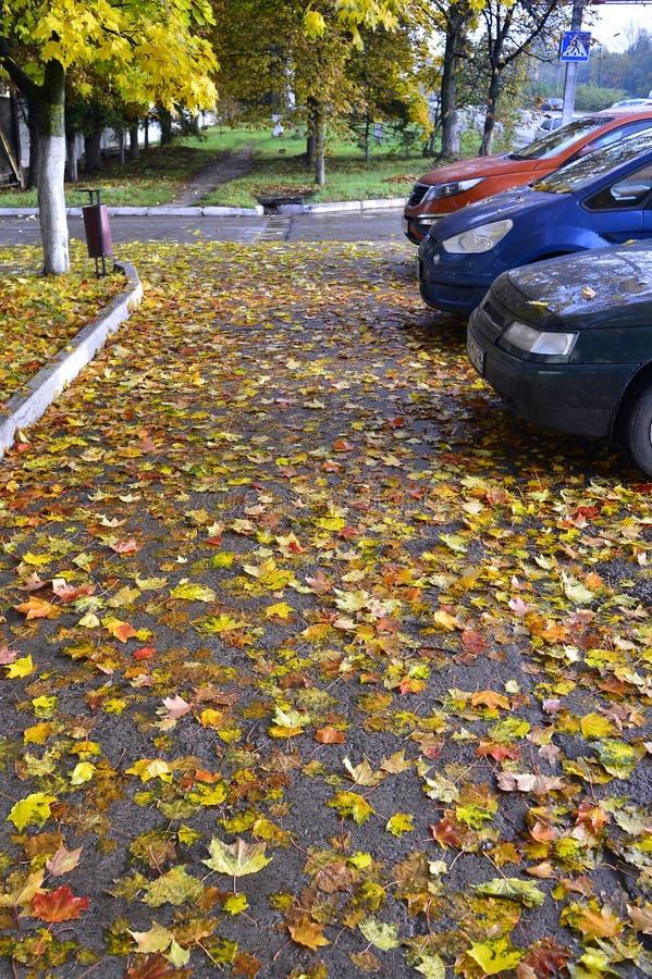 Gelber und roter Herbstlaub, gefallen auf Asphalt und Autos stockfotografie