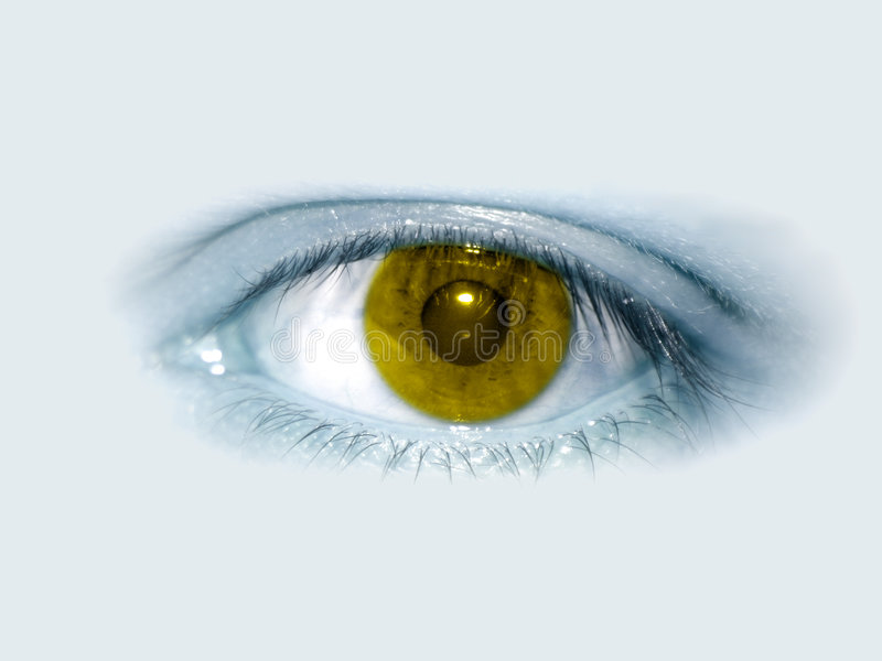 Gelbes Auge lizenzfreie stockfotos