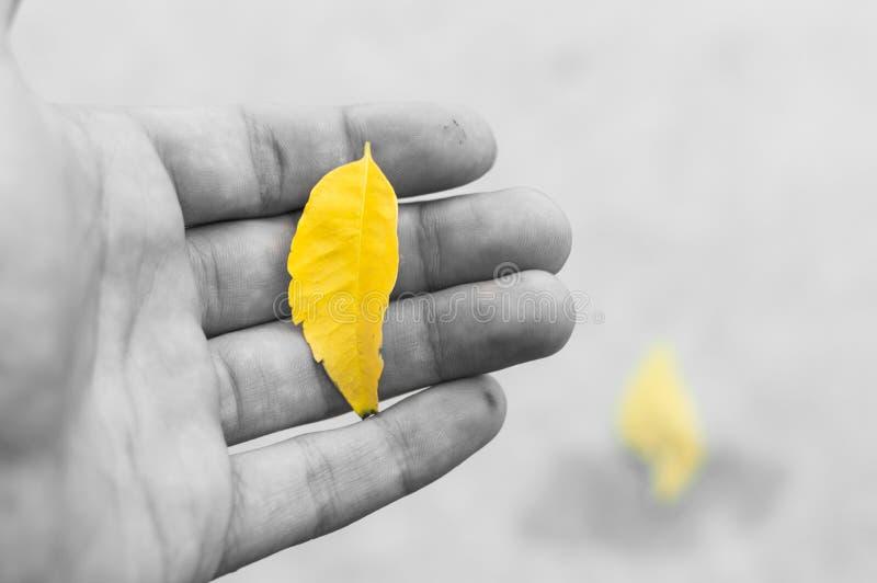 Gelbes Blatt stockfoto