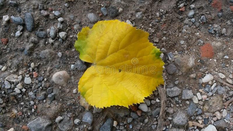Download Gelbes Blatt stockfoto. Bild von pfad, herbst, gelb, methode - 96927964