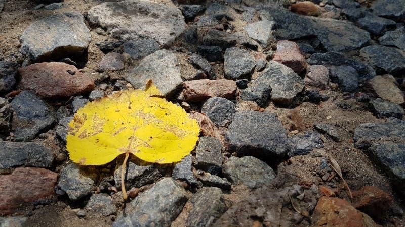 Gelbes Blatt des einzelnen Falles auf Kiessteinhintergrund stockfotografie