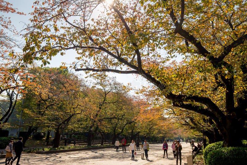 Gelbes Blatt von Ahornen im Herbst an Ueno-Park stockfotografie