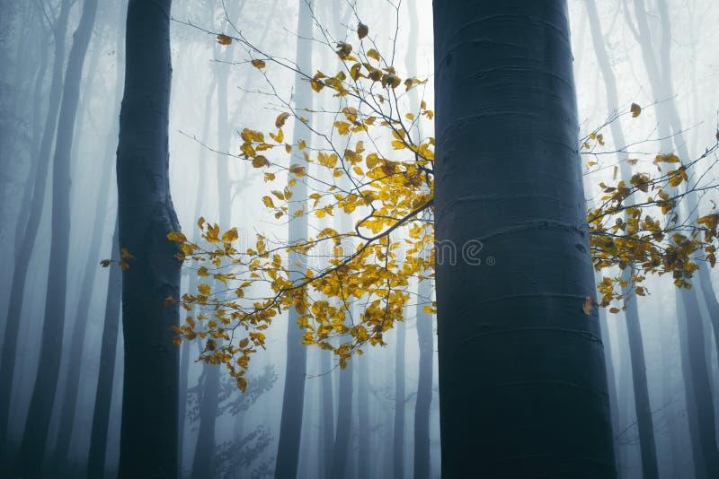 Gelbes Blattherbstdetail im gespenstischen Wald lizenzfreie stockfotografie