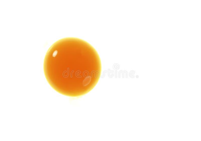 Gelbes Eigelb des Eies getrennt über Weiß stockfoto